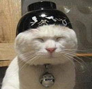Cat with bowl on head