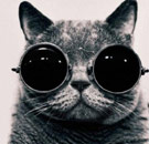Cat with aviator glasses on