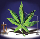 Marijuana leaf doing theater