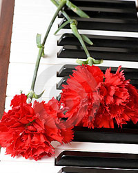 Carnations on top of piano keys
