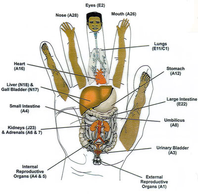 Korean hand chart for acupuncture