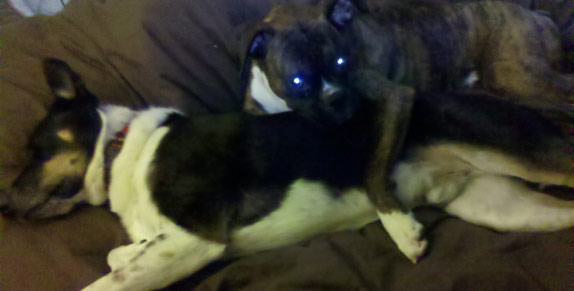 Dog hugging another sleeping dog