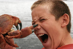Crab pinches boy's nose