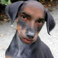 Creepy guy-dog combination