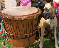 Dog looking at a drum in a drum circle