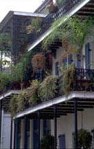 French Quarter balcony with plants hanging off