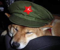 Dog sleeping in Communist hat