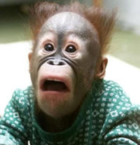 Monkey with a shocked face
