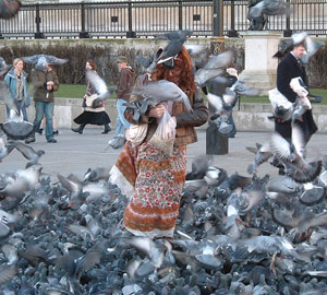Pigeons in a city square