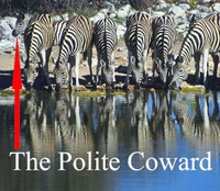 One zebra can't get to the watering hole