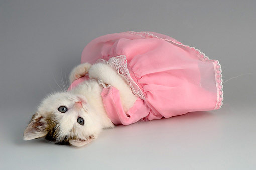 Cat in sexy pink dress