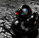 Oil spill rubber duck