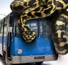 Snakes on a bus