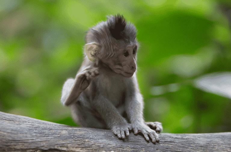 cheeky-little-monkey