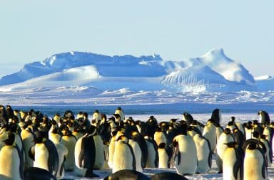 Penguins next to a glacier for size reference