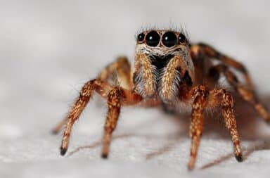 Spider ruining my life by looking at me, very cute