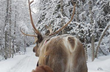 Reindeer butt pulling a sleigh