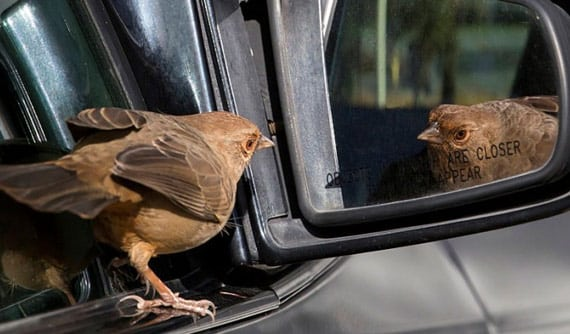 bird-car-window