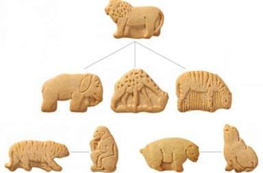 animal-cracker-graph