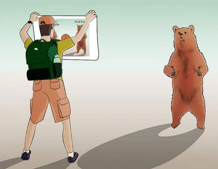 Bear color chart