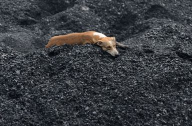 Dog laying in a pile of coal