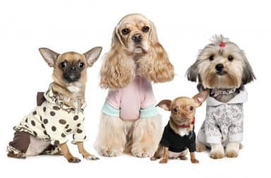 Four dogs in clothes