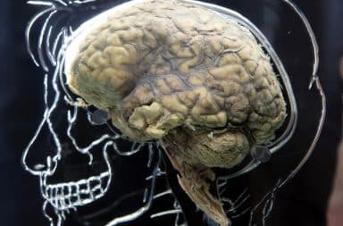 Human brain against a chalk sketch of human head