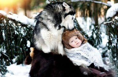 Wolf holding human baby