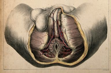 Perineum anatomy view