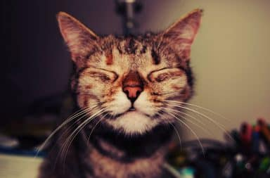 Smiling happy cat could be depressed