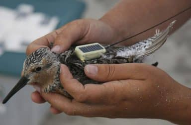Tracking device on a bird's back while in a human's hands