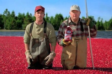 Ocean Spray Cranberry farmers standing knee deep in cranberries
