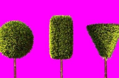 Bush shapes for women - tree hedges