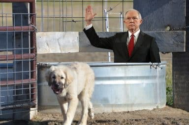 Jeff Sessions and a dog at a trough