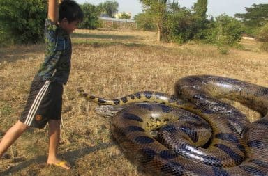Child kills large snake