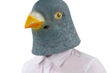 Man in pigeon mask costume
