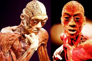 Two human bodies showing just muscles