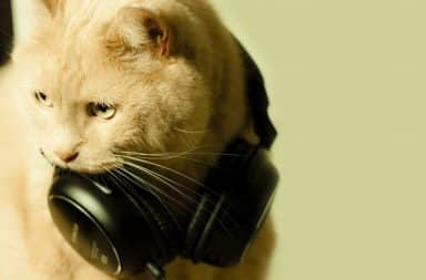 Cat wearing headphones