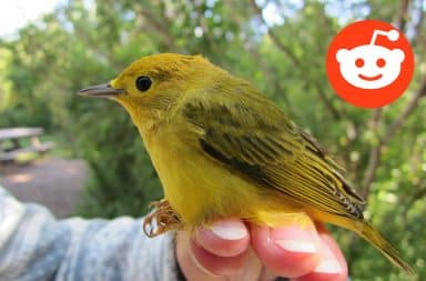 Subreddit birds warbler