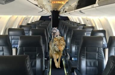 Wolf Airline