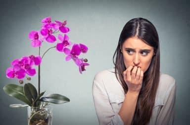 Nervous Orchids