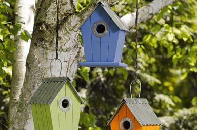 A house for dang birds
