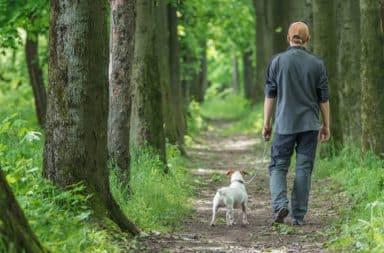 Dog Walks, Man Accompanies