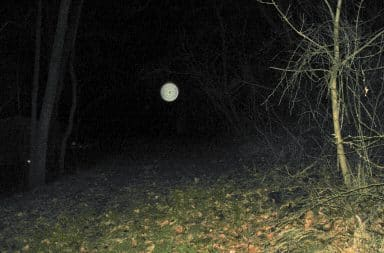 an orb in the woods