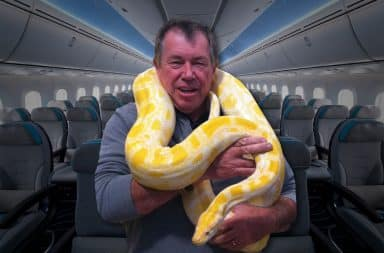 Say... a snake on a plane, why that's a heck of a premise, I should write that down