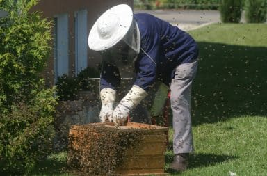 the man with lots of bees is at it again