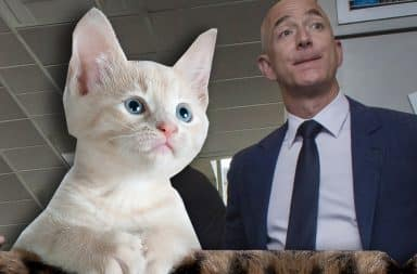 the kitten loves bezos and vice versa
