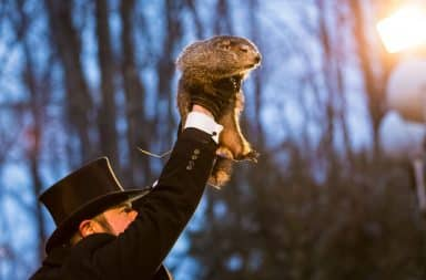 punxsutawney phil the groundhog being lifted up