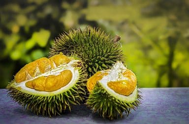 durian fruit how smelly