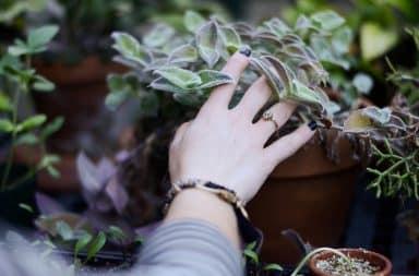 Woman touching a plant